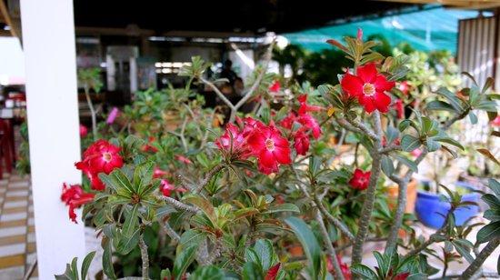 Royal Hotel: Flower