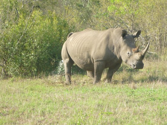 andBeyond Kirkman's Kamp: Rhino
