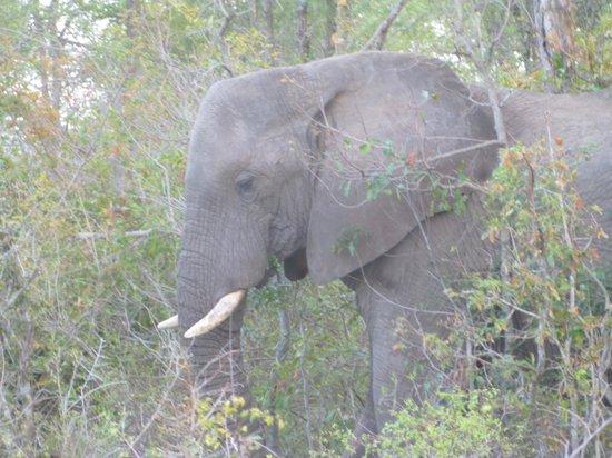 andBeyond Kirkman's Kamp: Elephant