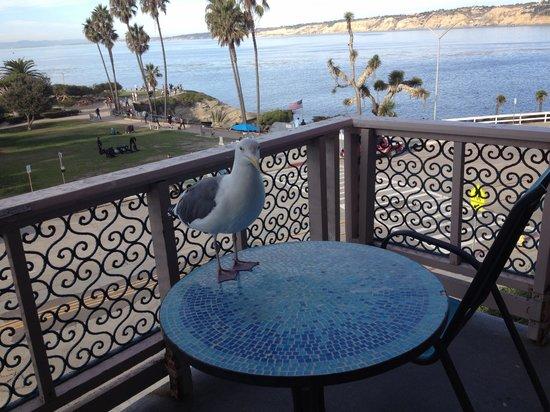 La Jolla Cove Hotel & Suites: Terrace