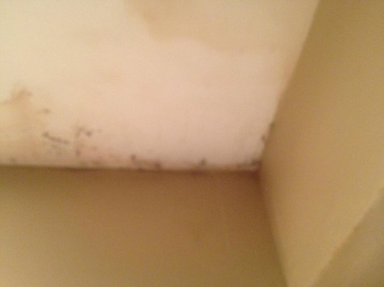 Crowne Plaza Orlando Downtown: moldy