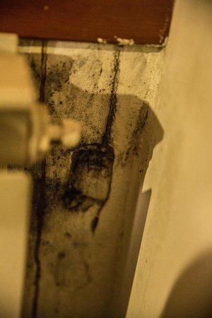 Antico Capon: mold