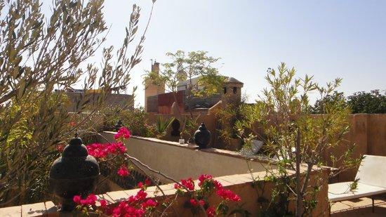 Riad Shalimar: Terrass