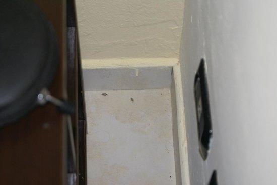 Royal Decameron Boa Vista : zo ziet de kamer er uit ...