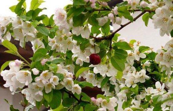 Der Weinmesser: Fruit trees everywhere