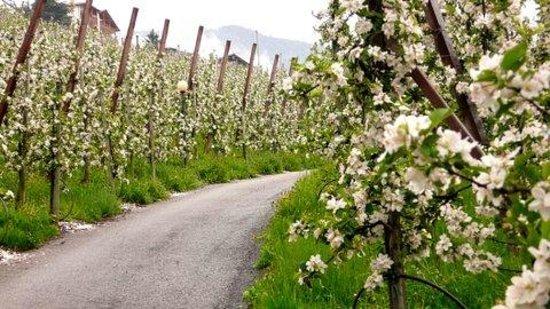 Der Weinmesser: Wonderful hiking trails through orchards.