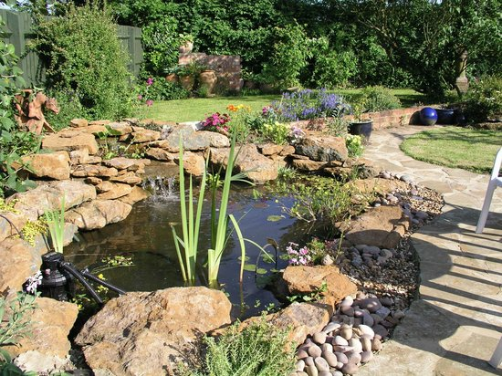 Silverstone Bed and Breakfast: Our beautiful garden and pond