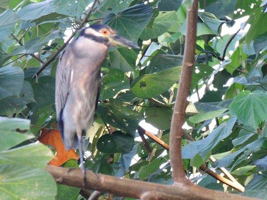 Laguna Lodge Tortuguero: Bird