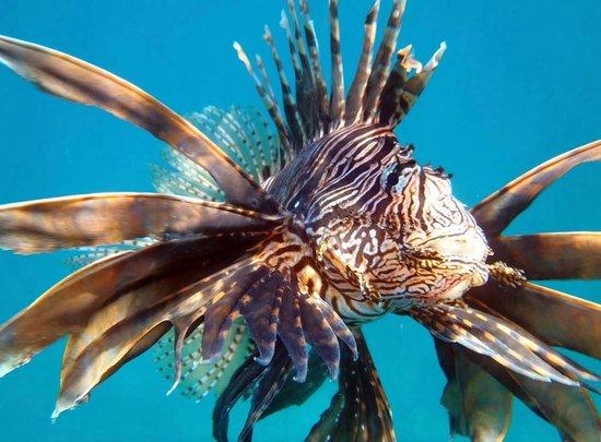 Calypso Plongee