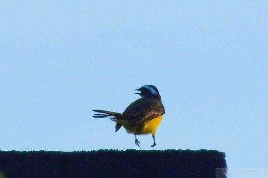 Arenal Manoa Hotel: Bird