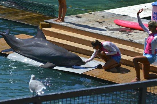 Key Biscayne, FL: Flipper show