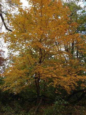 Fort Pillow State Park: November fall foliage