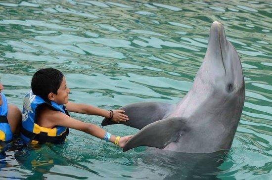 Dolphin Discovery: mi niño igualmente emocionado