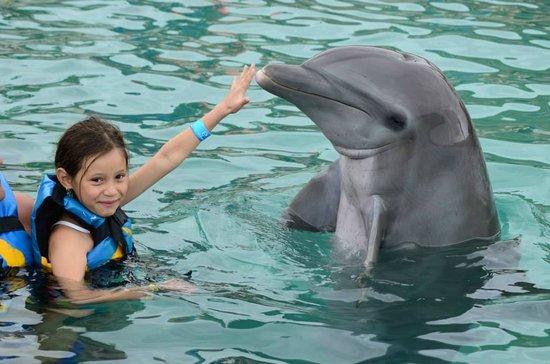 Dolphin Discovery: Mi niña Feliz con el delfin llamada Azteca