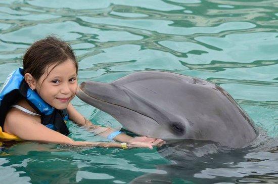 Dolphin Discovery: Bonita experiencia