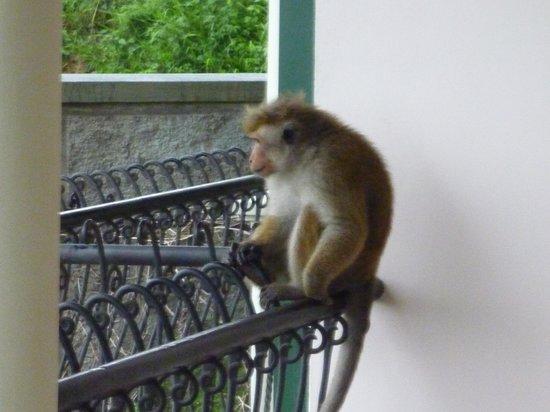 36 Bed & Breakfast: die Affen auf dem Weg zum See