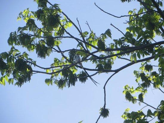 Maison Chablis Guest House : on a tree