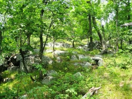 Sterling Forest State Park: forest