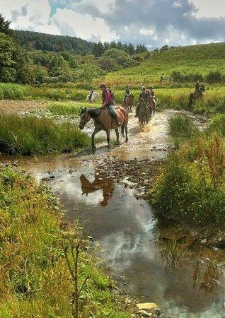 Bantry Bay Pony Trekking - Private Rides: Walking through the lake