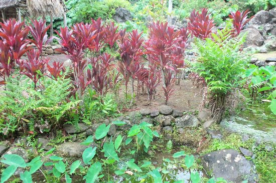 Iao Valley State Monument: Iao Needle Valley