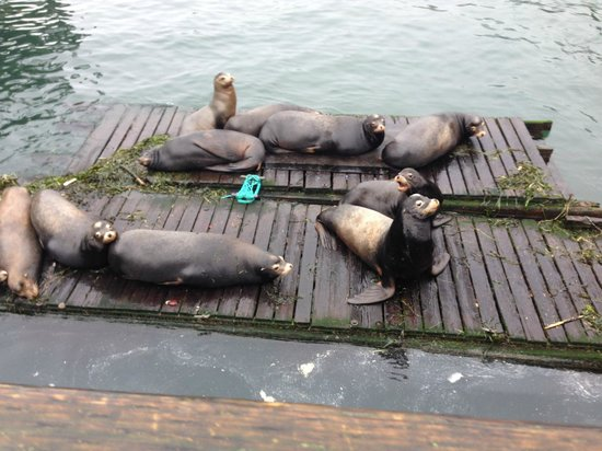 Newport's Historic Bayfront: Sea Lions