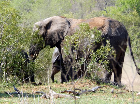 Under Mum's care - Picture of Kruger National Park, South