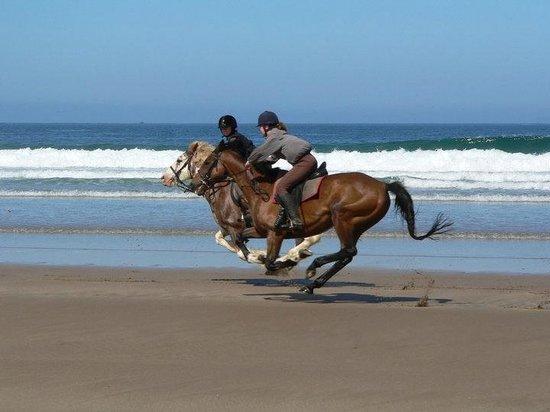 Mullacott Equestrian Centre