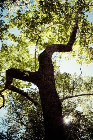 Creekside Inn at Sedona : Beautiful trees