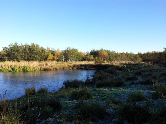 Drumpellier Country Park: one of the ponds