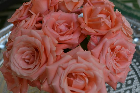 Ryad El Borj : Some of the beautiful roses that were everywhere