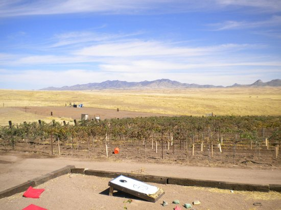 Arizona Hops and Vines照片