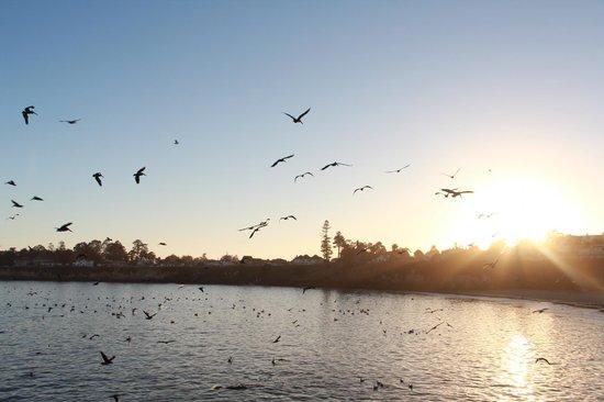 Santa Cruz Wharf: Sunset