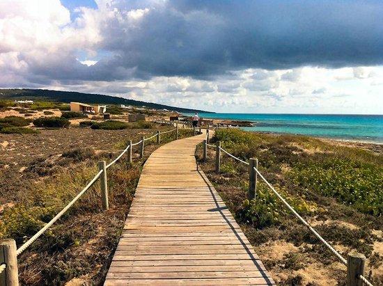 Ses Clotades: Holzweg durch Entlang der Playa Migjorn