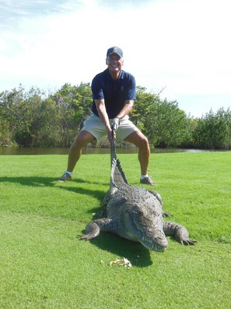 The Royal Caribbean: Lots of wild gators on the golf courses