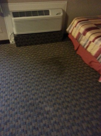 BEST WESTERN PLUS Westwood Inn: stained carpet