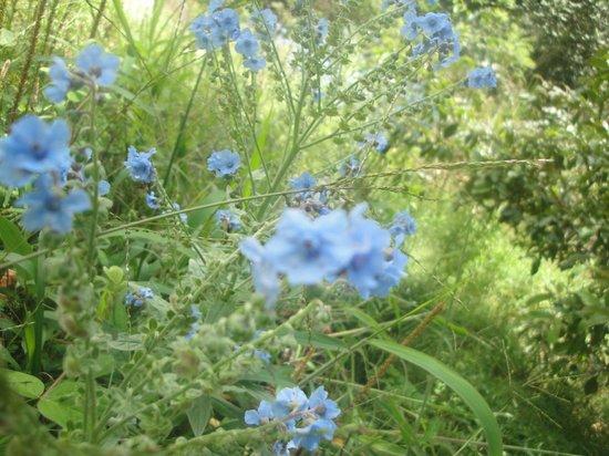 Los Jardines de Mandor: Flores