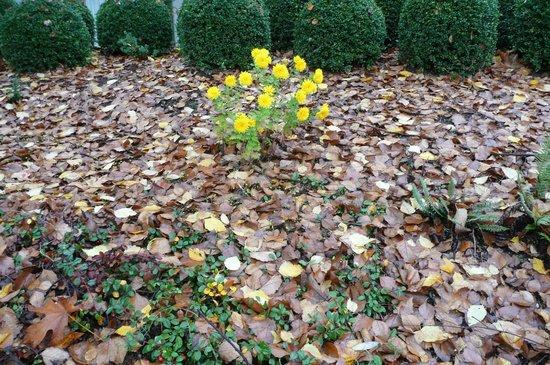 Valley River Inn : November flowers