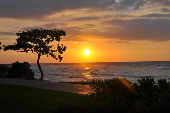 Four Seasons Resort Hualalai : Sunset from Beach Tree