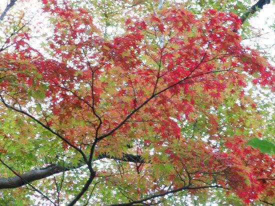 Koetsuji Temple: 紅葉