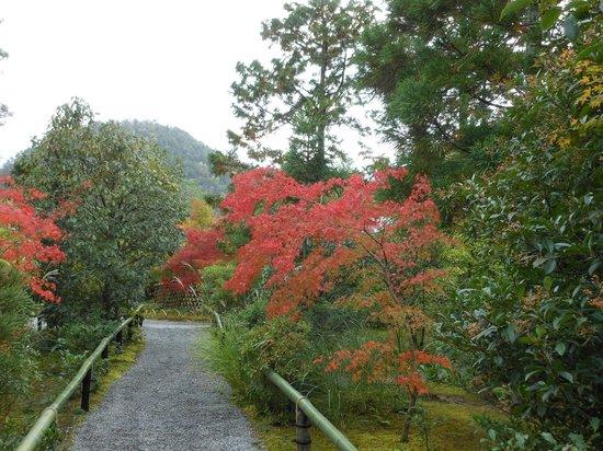Koetsuji Temple: 少し色づいた紅葉