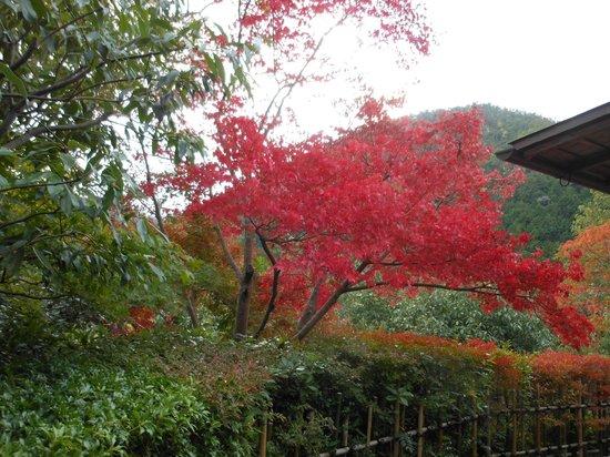 Koetsuji Temple: ここは見ごろです
