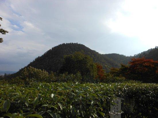 Koetsuji Temple: 周囲の山を望む