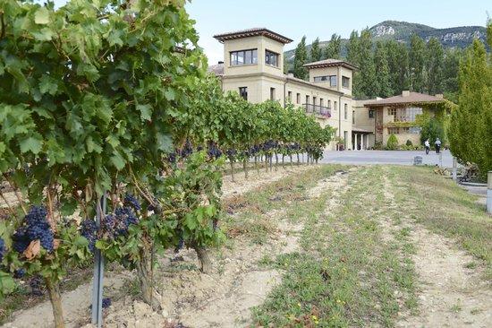 Hospederia del Vino : Vines to Hotel