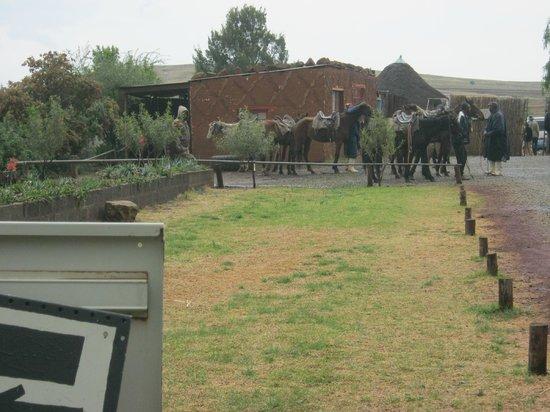 Malealea Lodge : Basotho pony rides
