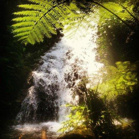 Nkuringo Bwindi Gorilla Lodge: lovely waterfalls