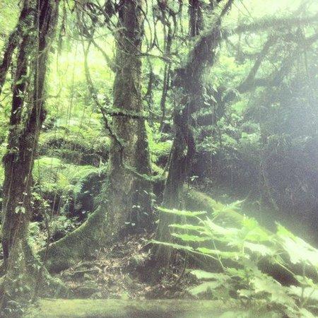 Nkuringo Bwindi Gorilla Lodge: inside the forest
