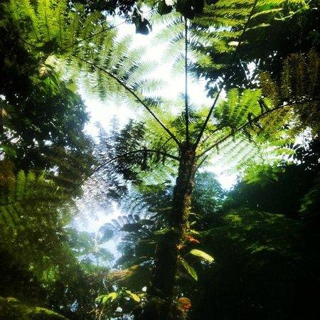 Nkuringo Bwindi Gorilla Lodge: forest walk