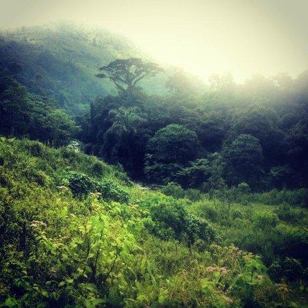 Nkuringo Bwindi Gorilla Lodge: walk into the forest