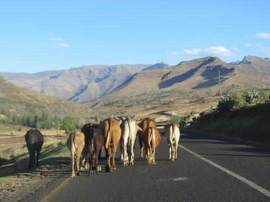 Maliba Mountain Lodge: Strasse zur Lodge
