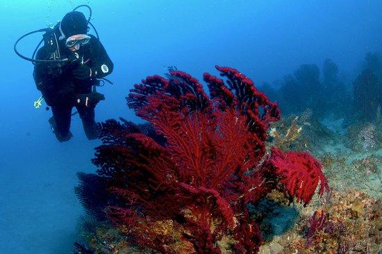 Spiro Sub Diving Elba